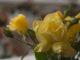 2018-05-05 71e. concurs nacional de roses_6213