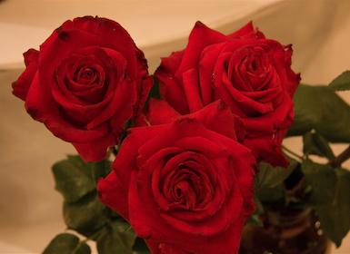 Notes sobre les roses a l'època romana