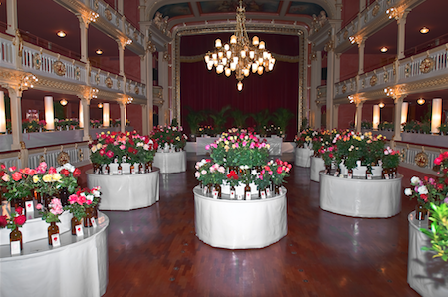 Torna l'Exposició de Roses del Centre de Lectura