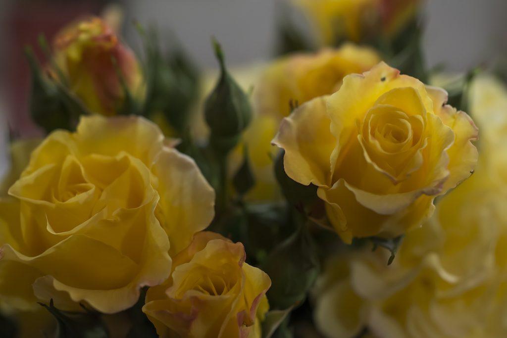 2018-05-05 71e. concurs nacional de roses_6208